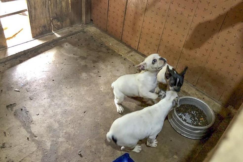 Após acompanhamento, os cães devem ser encaminhados para adoção — Foto: Prefeitura de Curitiba