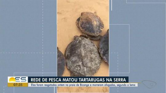 Tartarugas encontradas em praia da Serra morreram afogadas, diz Iema