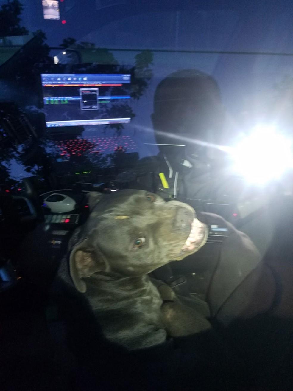 Cachorro 'sequestra' carro policial no Texas — Foto: Kilgore Police Department/Facebook