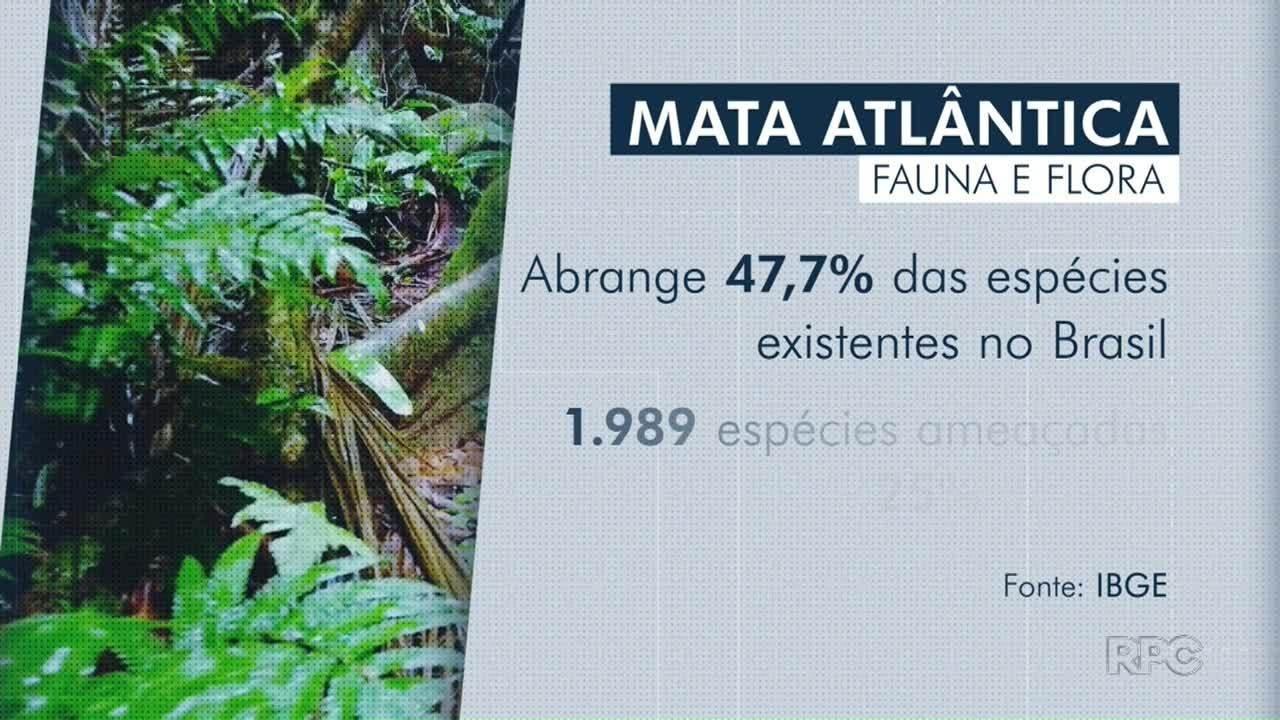 Mata Atlântica é o bioma mais ameaçado do Brasil