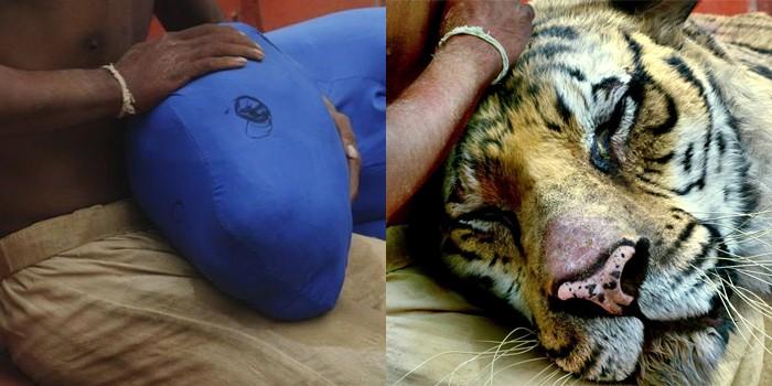 O tigre em 'A vida de Pi' (Foto: Divulgação)