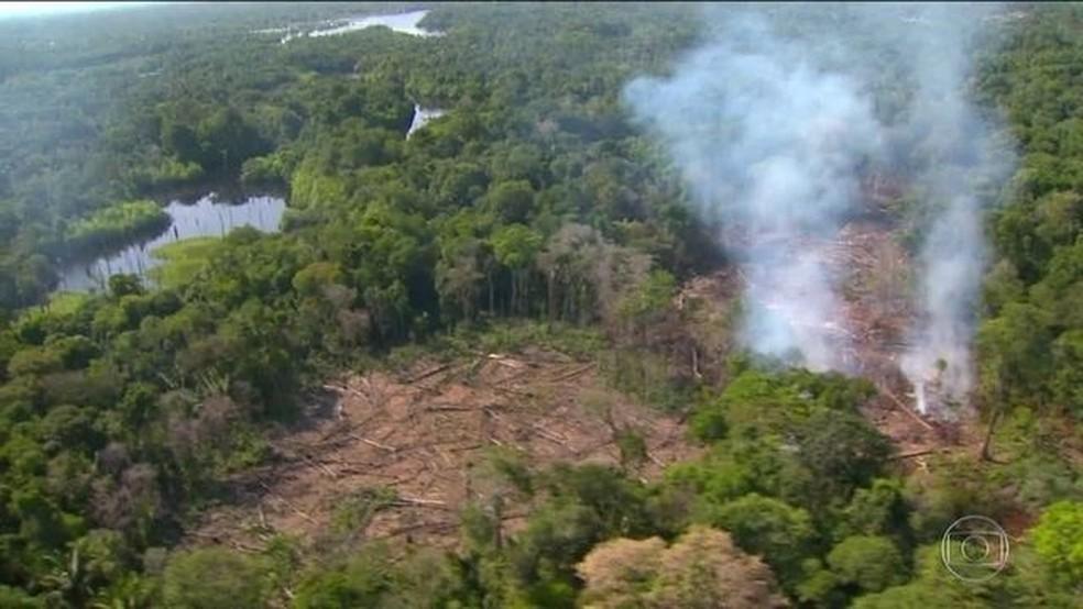 Relatório mostra que o Brasil lidera o desmatamento de florestas tropicais — Foto: Reprodução/JN
