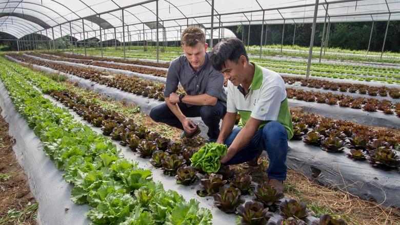 hortaliça-são-paulo (Foto: Rogerio Albuquerque)