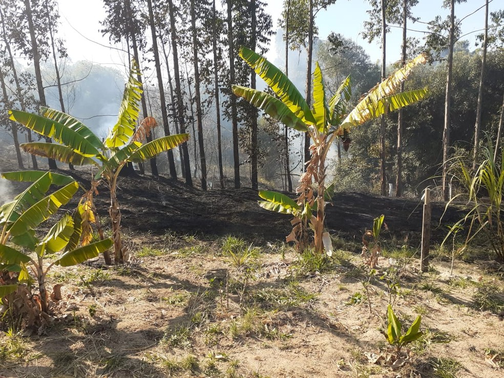 Fogo atingiu uma área grande de preservação ambiental em Garça  — Foto: Defesa Civil/ Divulgação