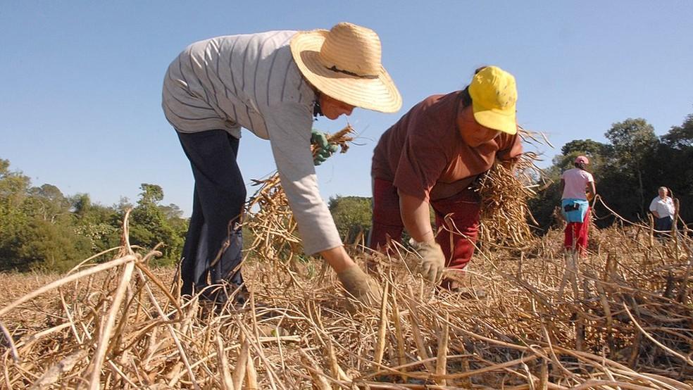 Cerca de 4,7 milhões de imóveis rurais já fizeram o Cadastro Ambiental Rural (CAR) |  (Foto: Hedeson Alves/Governo do Paraná)