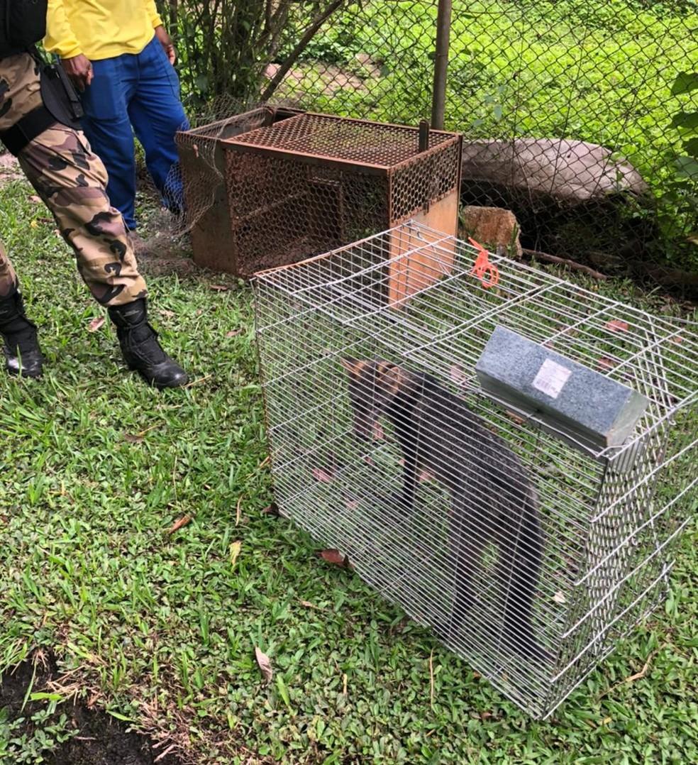 Raposa encontrada na residencia oficial do presidente, na Granja do Torto, no DF — Foto: Divulgação / Polícia Militar
