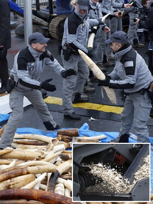 Montagem - marfim ilegal é pulverizado na França (Fot Charles Platiau/Reuters)