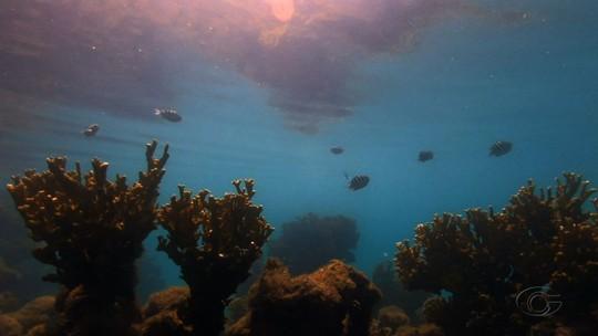 Pesquisadores avaliam a evolução da fauna e da flora na APA Costa dos Corais, entre AL e PE