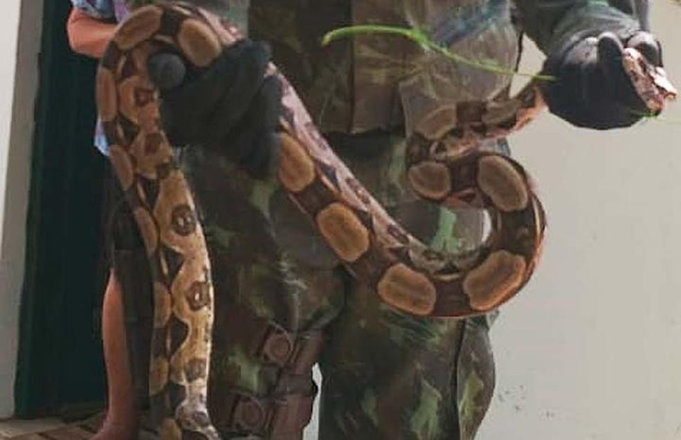 Agentes da Coppa fizeram resgate da cobra em Barra do Jacuípe, na Bahia — Foto: Divulgação/Coppa