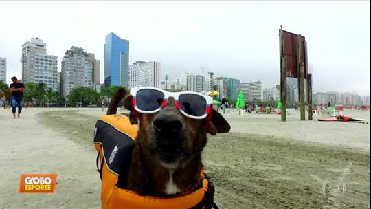 Globo Esporte mostra a vida do Parafina, cachorro que defenderá o Santos no mundial de Surfdog