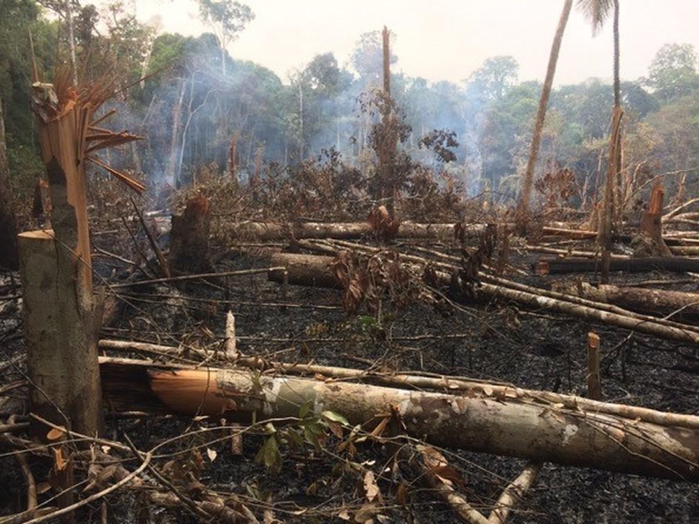 27/10/2029: Área de desmatamento ilegal detectado na área do PDS Virola-Jatobá, em Anapu — Foto: Reprodução / Amazônia Real