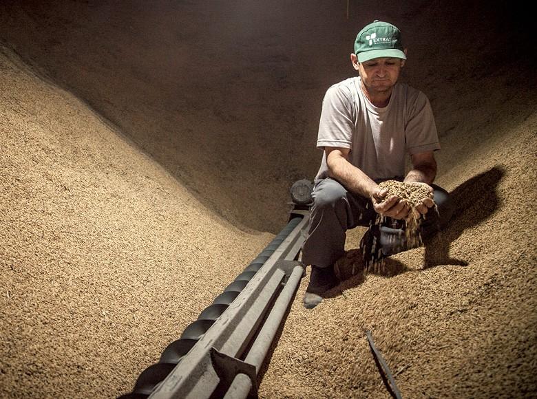 Everaldo Balbinot, coordenador da agroindústria da cooperativa, acompanha a secagem do arroz (Foto: Marcelo Curia)