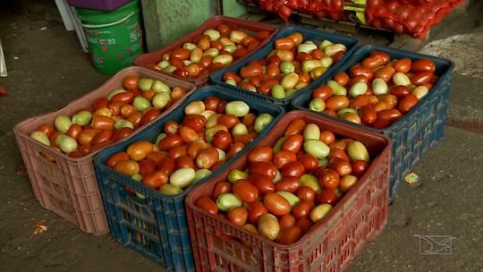 Mirante Rural mostra que fatores climáticos aumentam preço do tomate no Maranhão