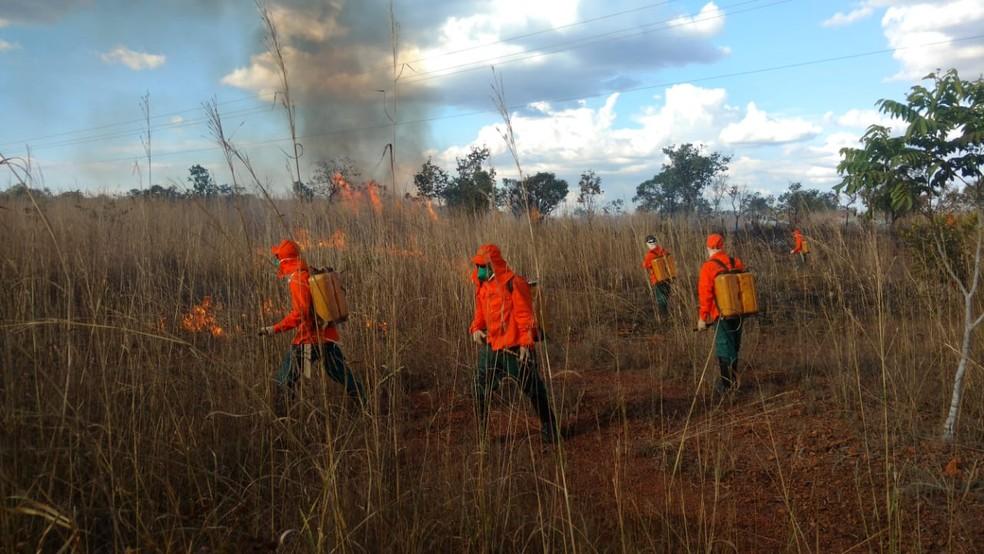 Plantas serão usadas para recuperar áreas degradas — Foto:  Naturatins/Divulgação
