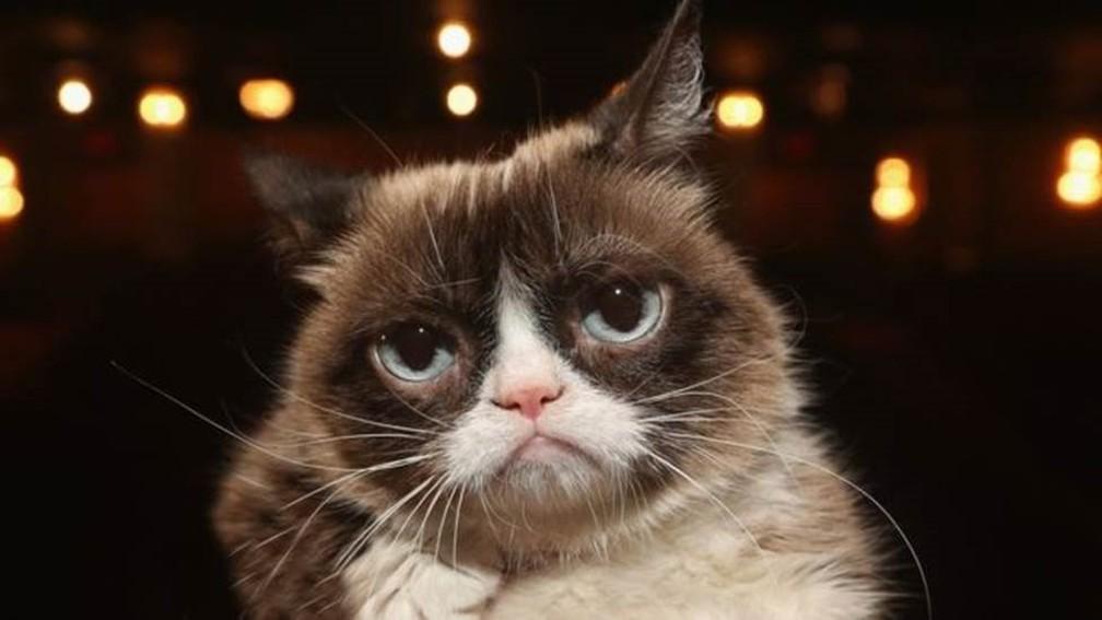 Morre Grumpy Cat, gata 'rabugenta' que se tornou uma lenda da internet — Foto: Getty Images via BBC