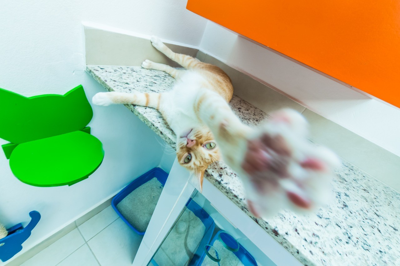 Mito ou verdade? Médica veterinária tira dúvidas frequentes sobre gatos