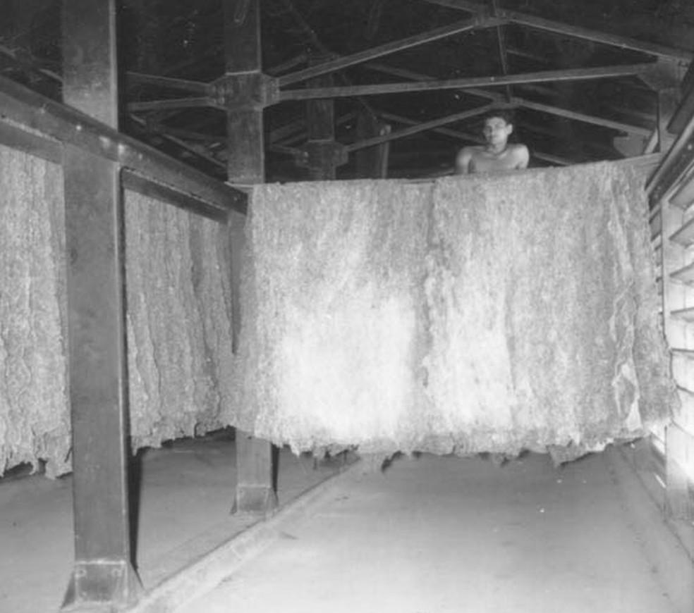 Secadores da borracha em Porto Velho — Foto: IBGE/ Arquivo