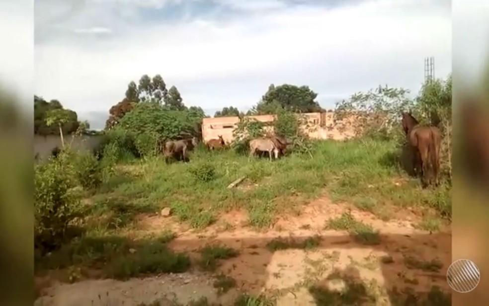 Cavalos pastam em obra abandonada de creche em Eunápolis (Foto: Reprodução/TV Santa Cruz)