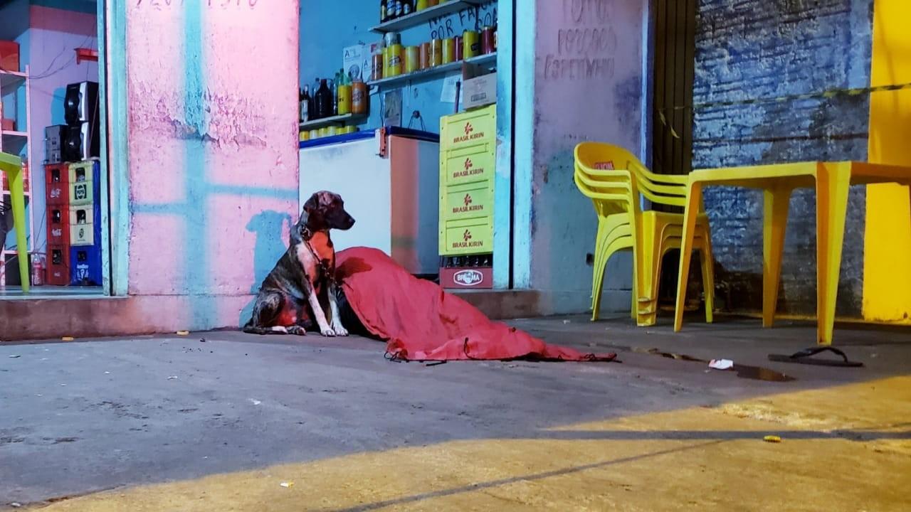 Cachorro fica ao lado do corpo de dono morto a tiros em Guaraí - Notícias - Plantão Diário