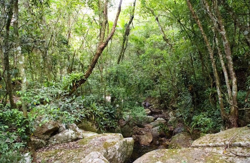 Bioma da Mata Atlântica em Florianópolis (SC) — Foto: Pedro Peloso/Arquivo Pessoal