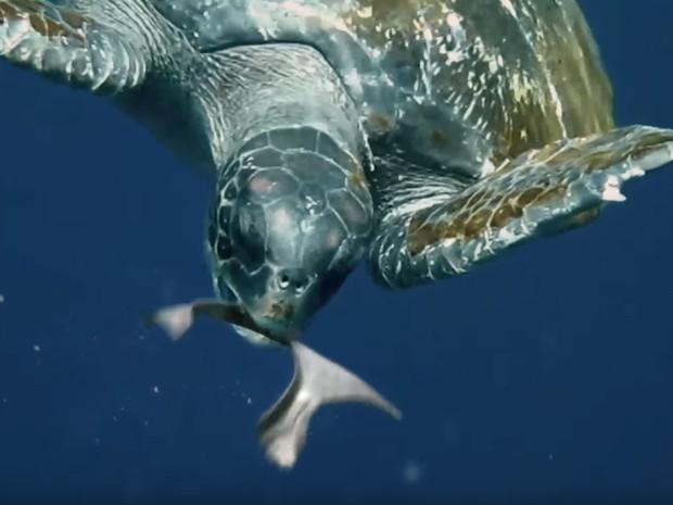 Tartaruga come aro comestível produzido pela Saltwater Brewery (Foto: Reprodução/Youtube/We Believers)