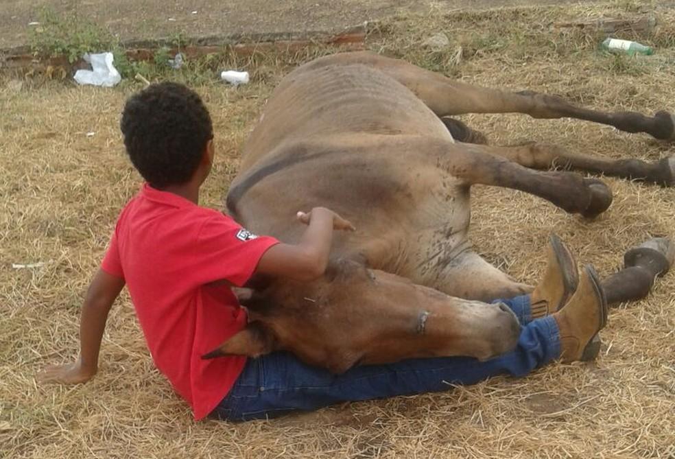 Criança foi vista consolando o animal que foi atropelado (Foto: Divulgação/Edna dos Santos)