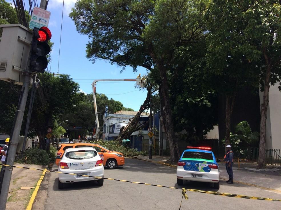 Bombeiros, técnicos da Celpe e agentes da Defesa Civil foram acionados para a retirada da árvore (Foto: Benjamim de Moura/TV Globo)