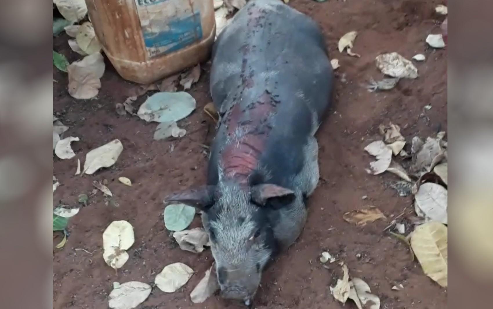 Morador filma quando fogo atinge fazenda e mata animais em Jataí: 'Não consegui soltar as galinhas'