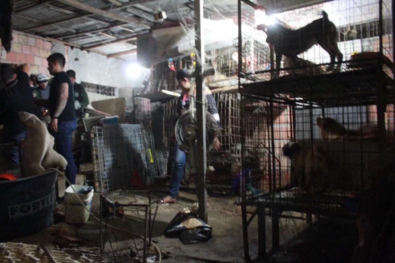 Pelo menos 100 animais são encontrados em situação de maus-tratos dentro de casa, em Manaus - Notícias - Plantão Diário