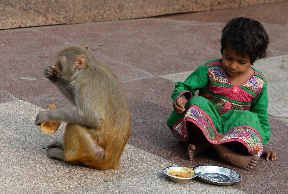 Na Índia, preocupação com subnutrição faz com que diretrizes tenham mais calorias e recomendem consumo de carte (Foto: Sajjad Hussain/AFP)