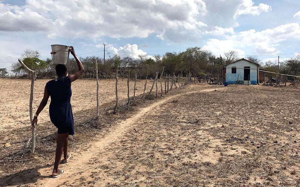Nordeste enfrenta seca de cinco anos; moradores enfrentam perda de safra e mortes de animais (Foto: Alan Tiago Alves/G1)