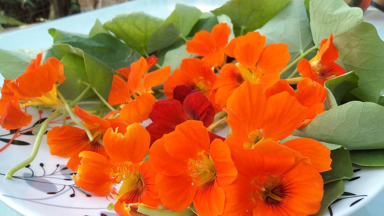 capuchinha_flores_flor_comestivel (Foto: Vlaeria Farah/Flickr)