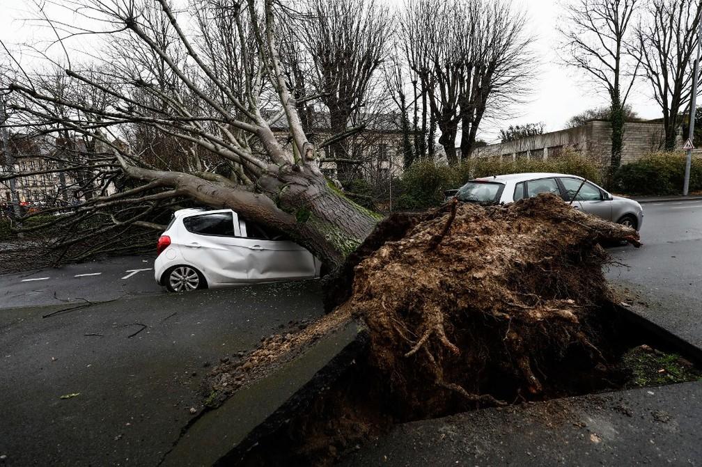 Queda de árvore destrói carro em Caen, no norte da França, neste domingo (16), após passagem da tempestade Dennis — Foto: Sameer Al-Doumy/AFP