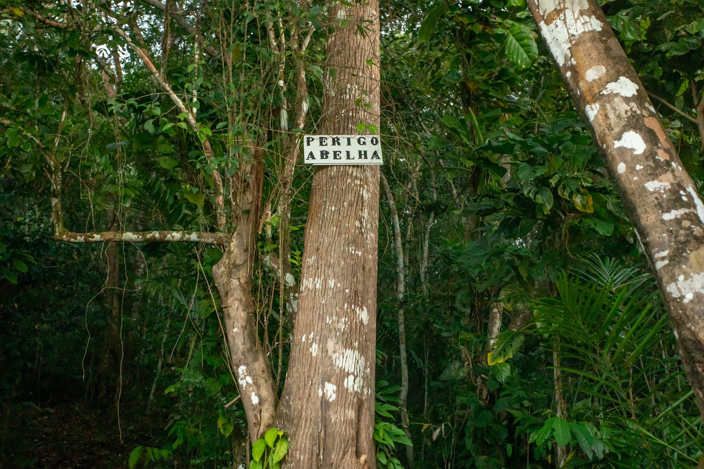 Própolis vermelho de Alagoas: em meio a destinos turísticos, abelhas movimentam pesquisas sobre dores e bactérias thumbnail