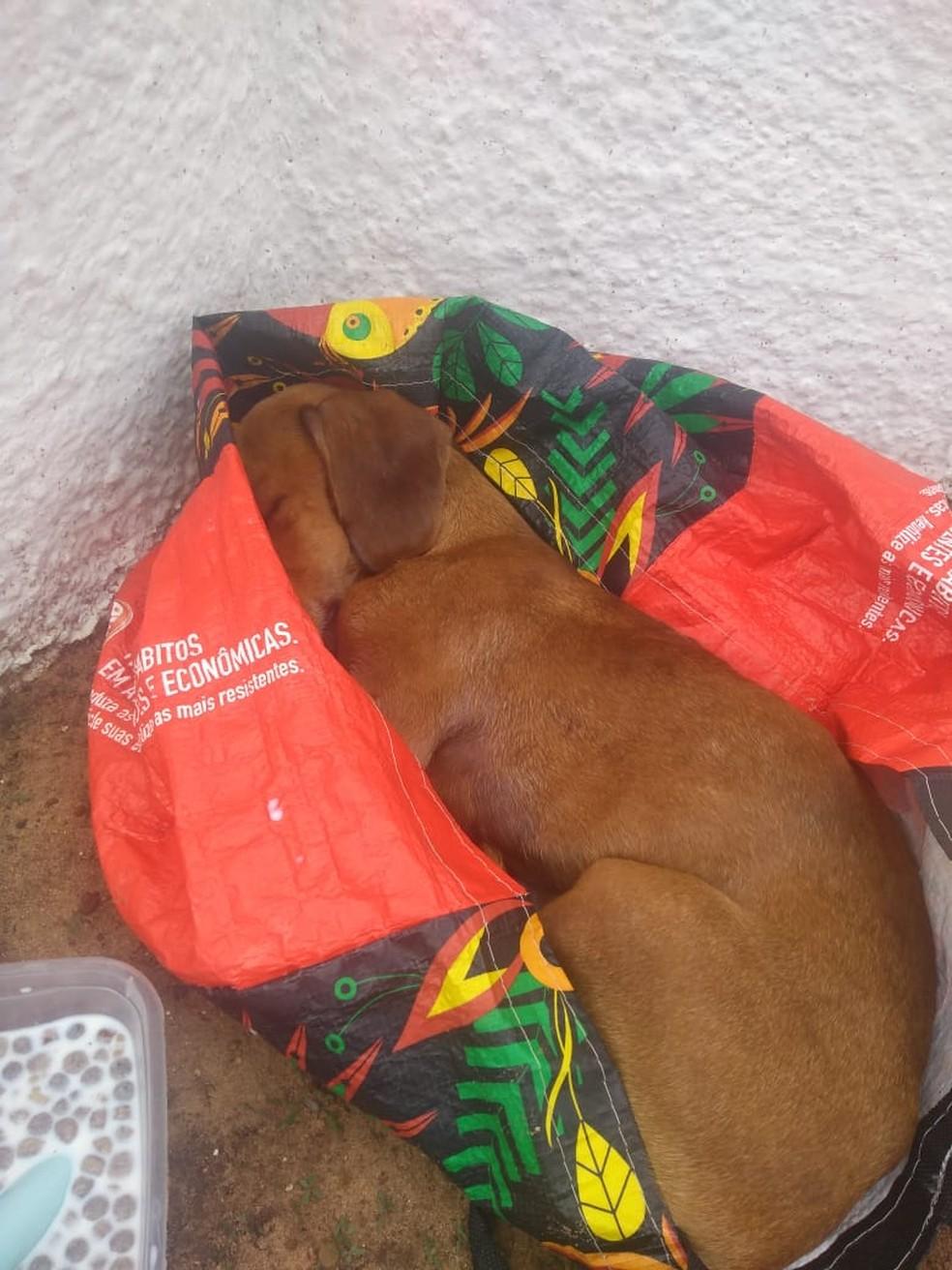 Cachorro foi abandonado dentro de sacola em Catanduva — Foto: Amanda Franco
