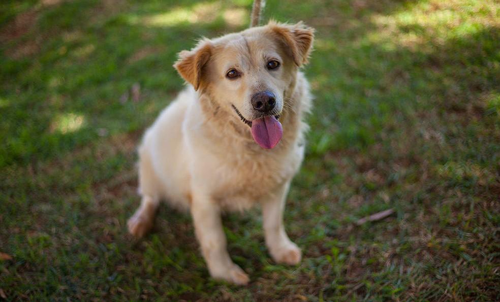 Canil Municipal vai disponibilizar cerca de 15 cães para adoção neste sábado (14) em Juiz de Fora — Foto: Rodrigo Souza/Divulgação