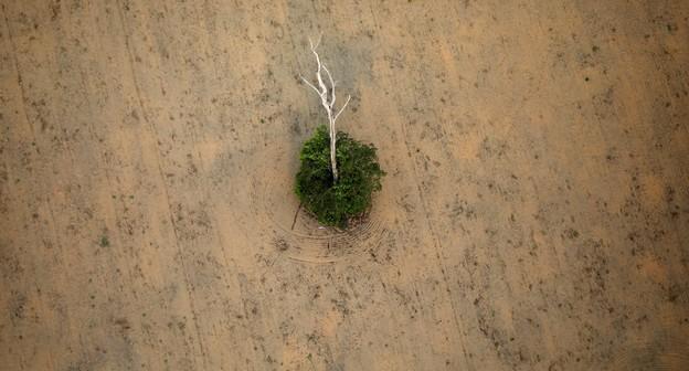 Avanço do desmatamento na Amazônia faz agro perder mais de R$ 5 bilhões por ano