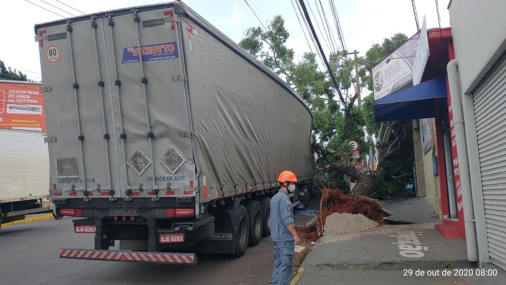 Carreta ficou enroscada em galho de árvore na Avenida Brasil — Foto: Corpo de Bombeiros