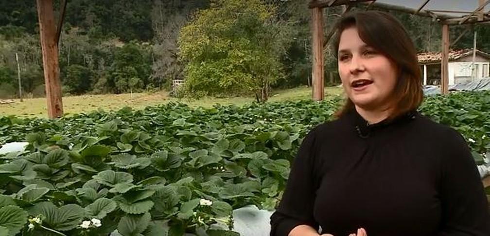 Joana Bett e a plantação de morangos orgânicos no Sul catarinense — Foto: Reprodução/ NSC TV
