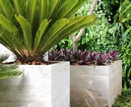 9 espécies de plantas para usar como forração em vasos