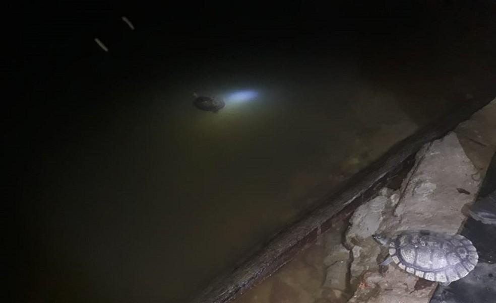Tartarugas retornaram à natureza em RO — Foto: PM/Divulgação