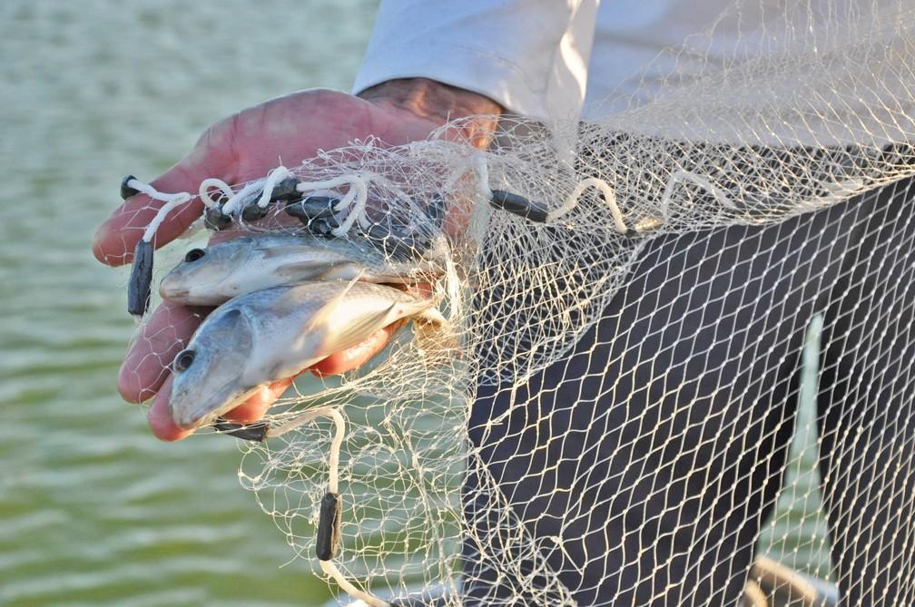 Pesquisadores identificam espécies de peixes mais comuns no Rio São Francisco — Foto: Divulgação/Cemafauna/Univasf