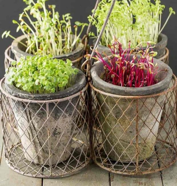 Quem não tem quintal ou varanda em casa pode cultivar plantas em pequenos vasos  (Foto: Reprodução/Pinterest)