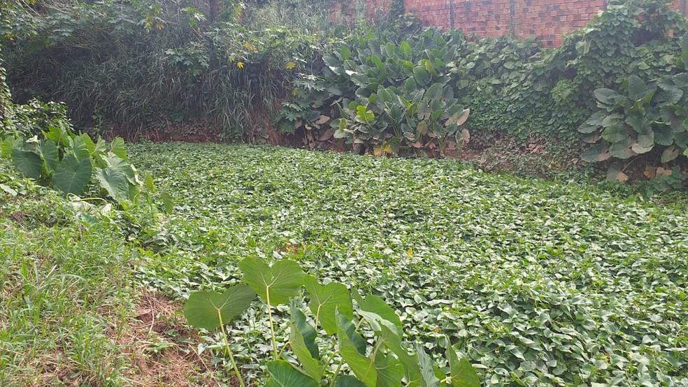 Os fundos da residência que é tomada por um igapozal (grande quantidade de igapós) — Foto: Denarc / divulgaçaõ