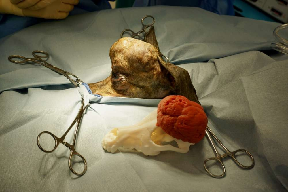 Molde 3D do crânio de Patches (Foto: Michelle Oblak/University of Guelph)