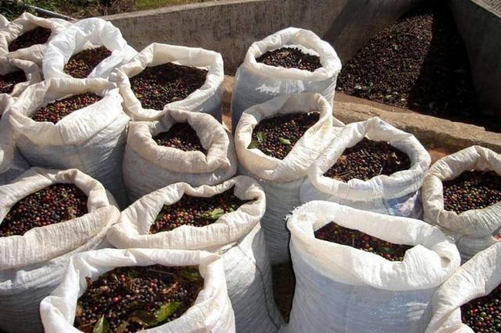 A produção para a região do Sul de Minas está estimada em até 16,4 milhões de sacas, segundo Conab (Foto: Divulgação/CCCMG)