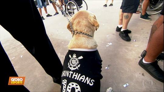 """Conheça a Hanna, a """"labradora da Fiel"""", cão-guia que vai com o dono aos jogos do Corinthians na Arena"""