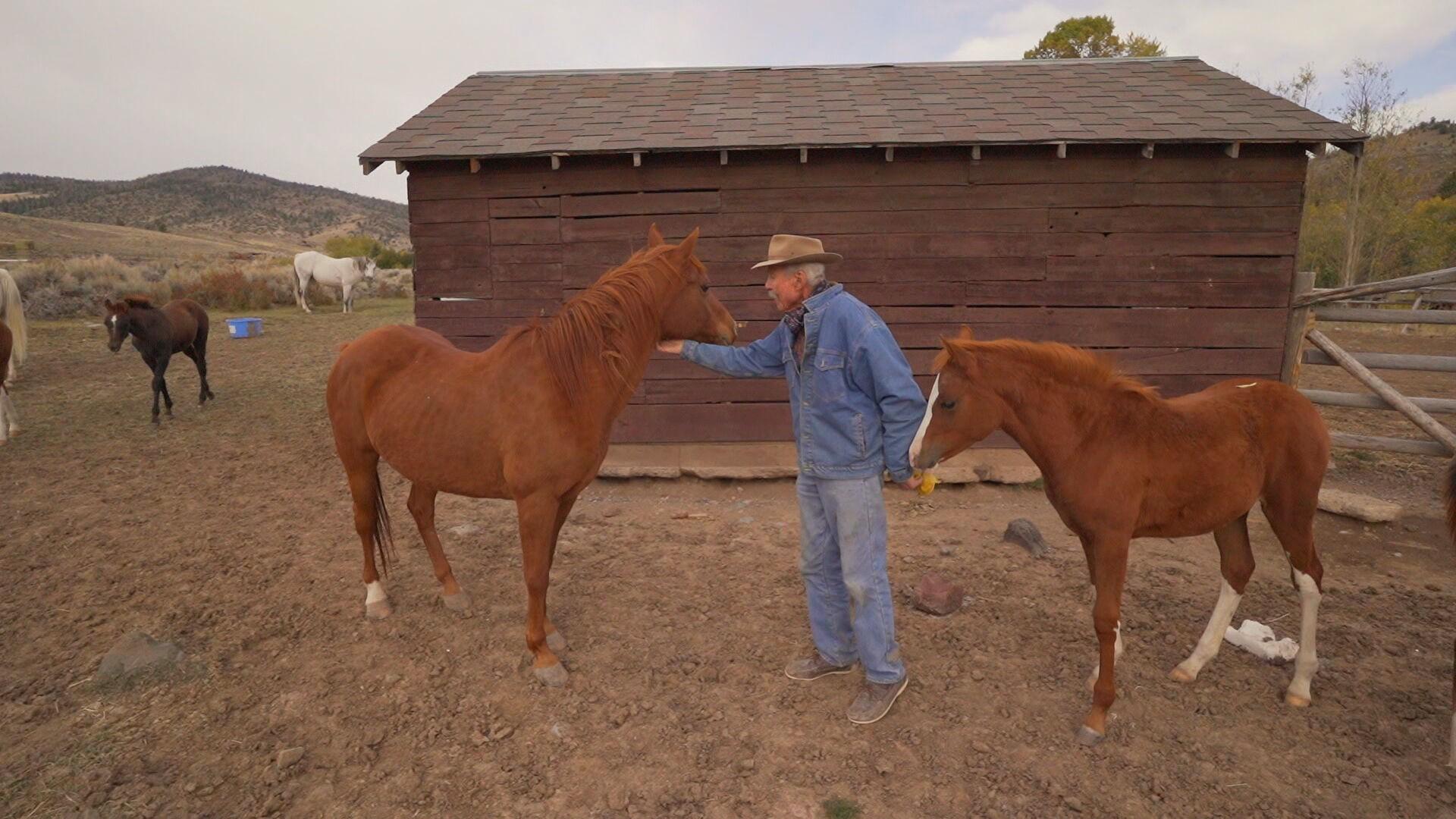 'A vida na cidade não é para seres humanos', diz caubói que mora há 50 anos em fazenda
