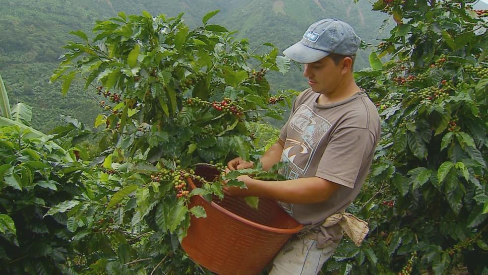 Cafeicultores da Costa Rica contam com a topografia e o solo diferenciados para produzir café de ponta (Foto: Devanir Gino/Reprodução EPTV)