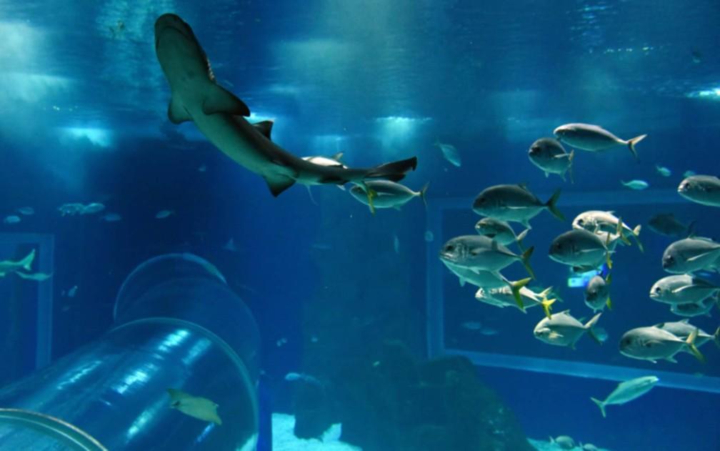 AquaRio é o primeiro aquário a receber selo de certificação de sustentabilidade marinha  — Foto: Alexandre Macieira/Divulgação